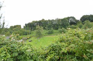 Camomile Green