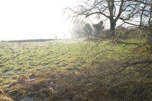 Whittington Way Bream