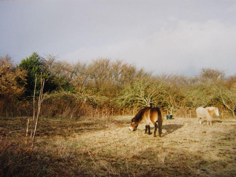 3 Pilgrims Lane Chilham