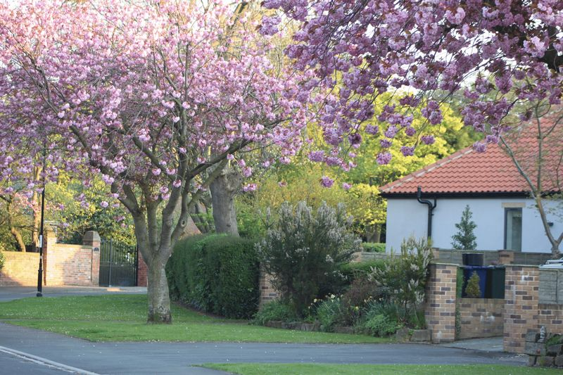 Victoria Road in Spring