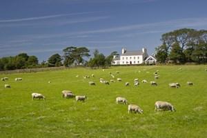 Berrag Farm, Sandygate