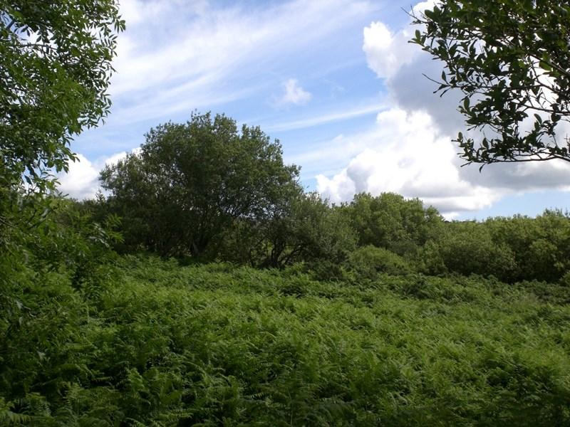 Strenaby Abbeylands