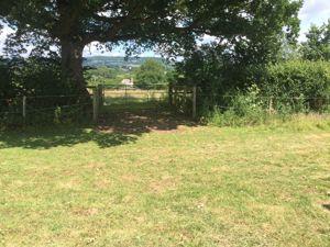 Land Plymtree