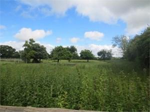 Cross Lane Long Sutton
