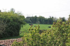 The Cross Buckland Dinham
