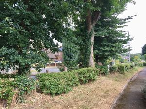 Mosse Gardens Fishbourne