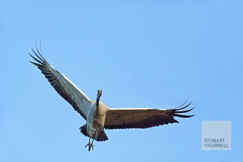 Crane Landing