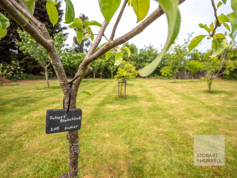 Orchard Variety