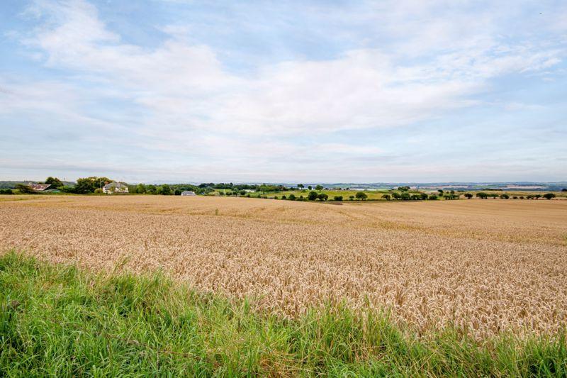 Farm Road Crombie