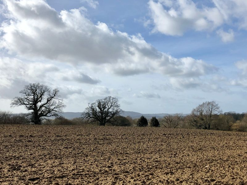 Chanctonbury View