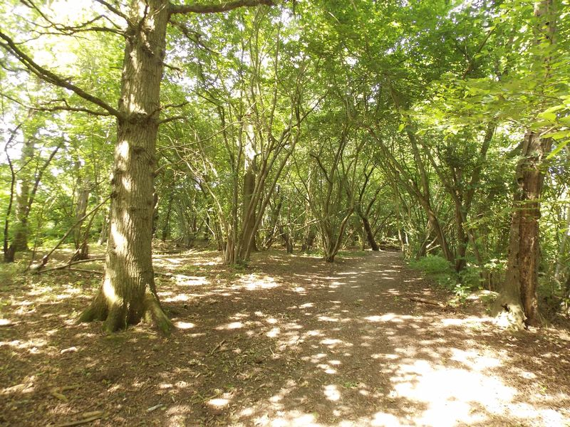 Warminghurst