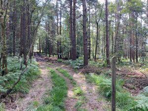 Forest Grange