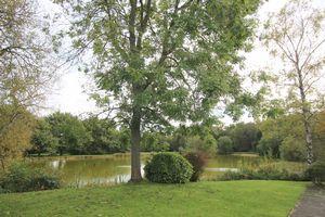 The Green Burgh Heath